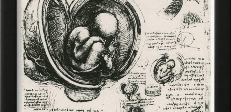 Voyage Dans Un Placenta